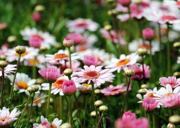Garten neu anlegen (Anleitung) | Ideen & Tipps für's Gestalten