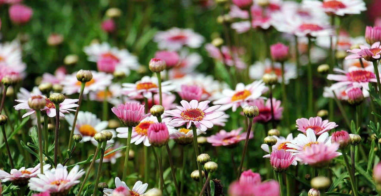 Blumenbeet im Garten