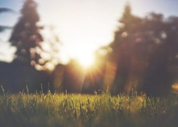 Garten pflegeleicht anlegen (Anleitung) | Naturnah gestalten