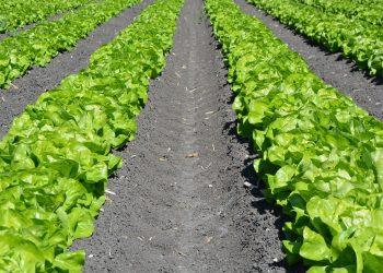 Garten richtig planen (Anleitung) | Ideen für Gartenplanung