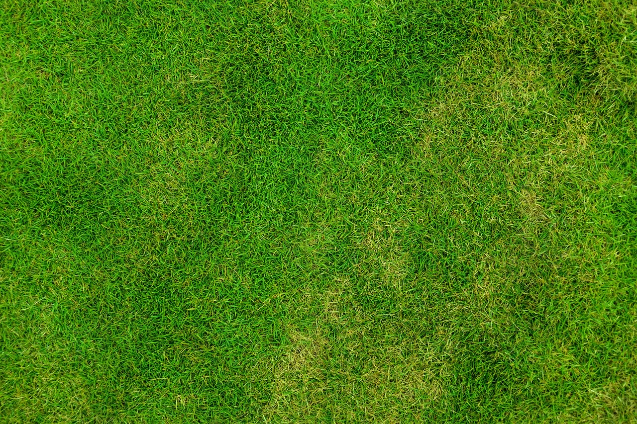 Garten Gras Rasen