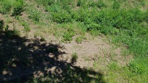 Kahle-Stellen-Gras