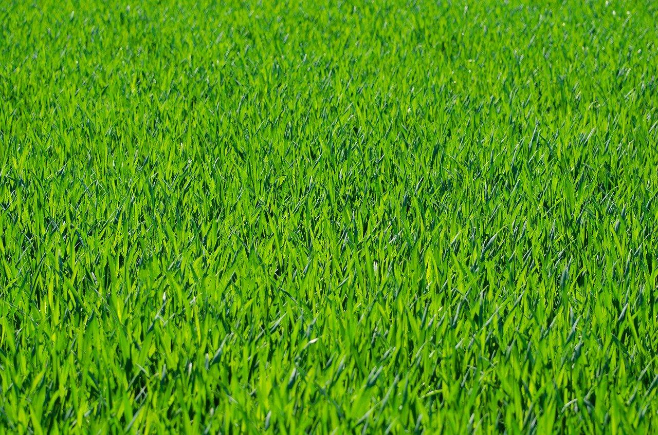 Rasen Gras Garten