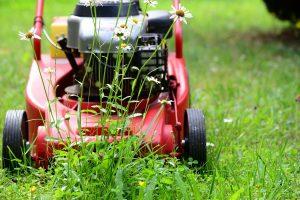Rasen Wiese Mähen Rasenmäher