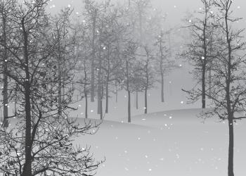 Schneekehrmaschine Vergleich | Kehrmaschine für Schnee kaufen