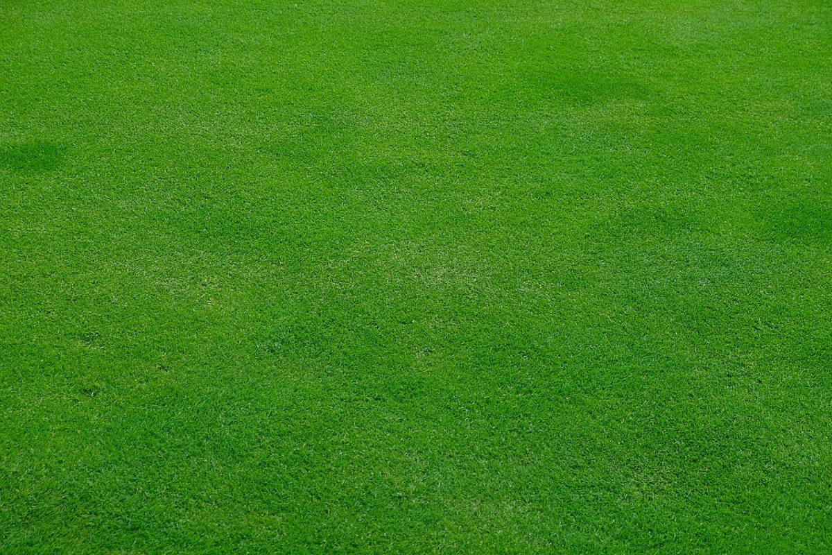 Grüner Gepflegter Rasen Wiese Gras Rasenpflege