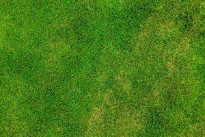 Wiese Garten Rasen Vertikutieren Rollrasen