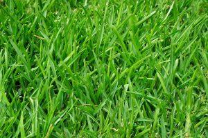 Gras Garten Grashalm Wiese Rasen