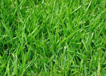 Rasen mulchen und vertikutieren (Anleitung) | Garten-Tipps