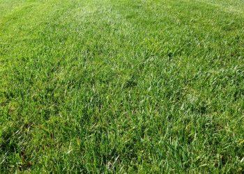 Rasen vertikutieren & düngen | Nach oder vor Vertikutierer?