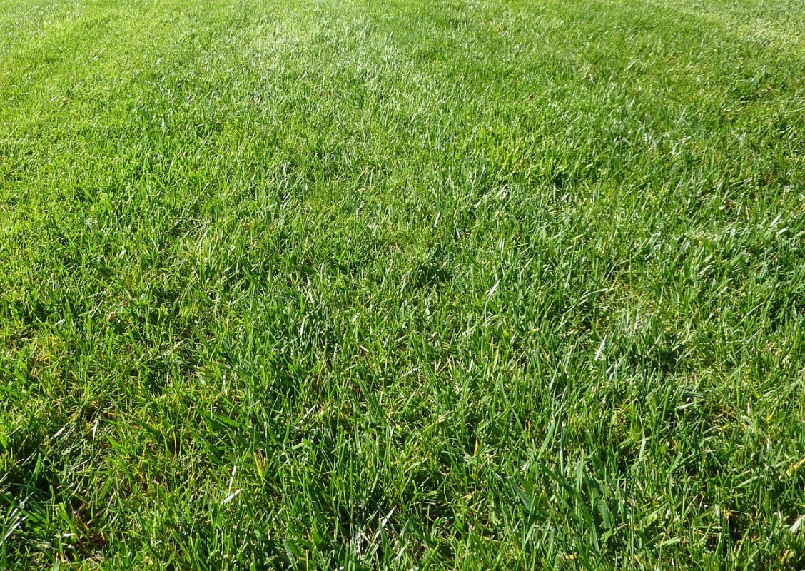 Gras Garten Rasen Rasenpflege Wiese