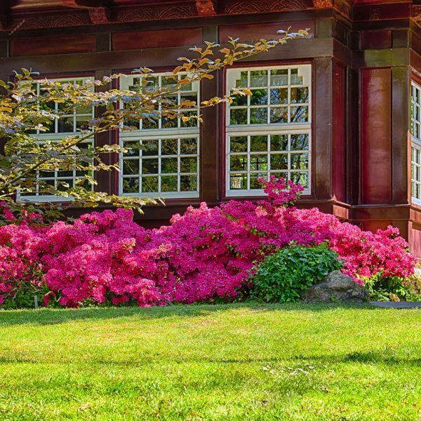 Haus Garten Rasen Rasenpflege Pflanzen Blumen