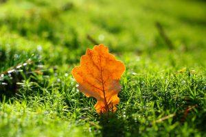 Moos Rasen Blatt Grün Unkraut