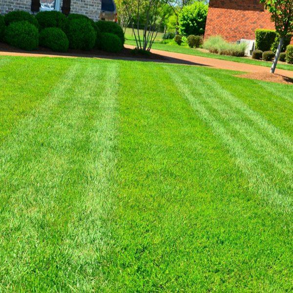 Rasen Garten Rasenpflege Gras
