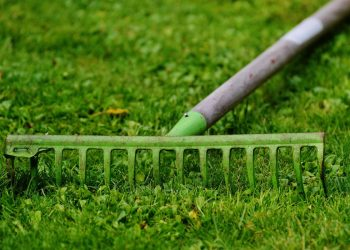 Rasen mit Rechen vertikutieren | Schneidrechen statt Vertikutierer?