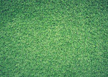 Rasen richtig vertikutieren (Anleitung) | Tipps für das Gras im Garten