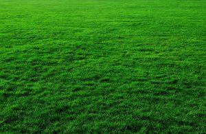 Rasen Rasenpflege Grün Satt Wiese