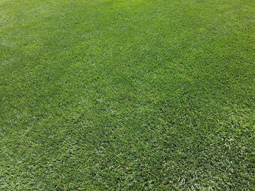 Rasen Rasenpflege Vertikutieren Garten Gras