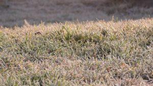 Winter Rasen Frost Rasenfläche gefroren Eis