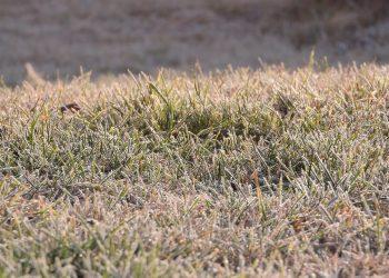 Rasen vor, im oder nach dem Winter vertikutieren? (Tipps)